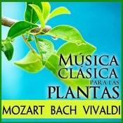 Música Clásica Para Las Plantas Songs