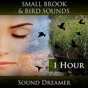 Small Brook And Bird Sounds - 1 Hour Song