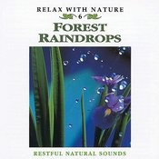 Relax With Nature, Vol. 6: Forest Raindrops Songs