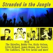 Stranded In The Jungle Songs