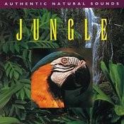 Jungle Songs