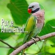 Pure Ambiental Songs