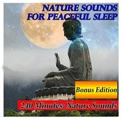 Sounds Of The Night: Natural Sounds For Sleep Song