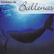 Sonidos De Ballenas Songs