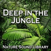 Tranquility Deep In The Jungle For Complete Rest And Peace Song