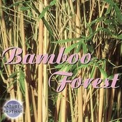 Nature's Rhythms: Bamboo Forest Songs