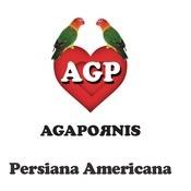 Persiana Americana Songs