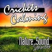 Crickets Calming (Nature Sounds) Songs