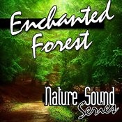 Enchanted Forest (Nature Sounds) Songs