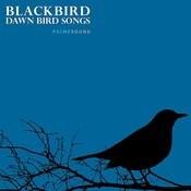 Blackbird Breezy Morning Bird Song Song