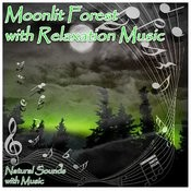 Moonlit Forest With Relaxation Music Songs
