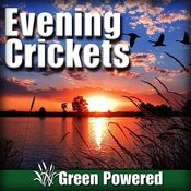 Evening Crickets (Nature Sound) Songs