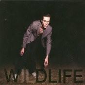 Wildlife Songs