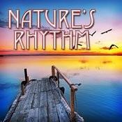 Nature's Rhythms Songs