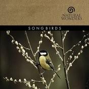 Songbirds Songs