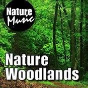 Nature Woodlands (Nature Sound with Music) Songs