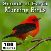 Sounds Of Earth: Morning Birds Songs