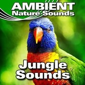 Daytime Jungle River Background Song