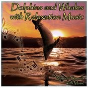 Dolphins And Whales With Relaxation Music Songs