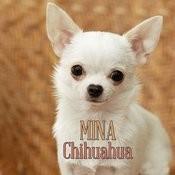 Chihuahua Songs