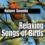 Relaxing Songs Of Birds Songs