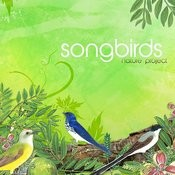 Songbirds Songs