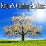Natures Calming Rhythms Songs