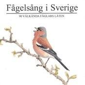 Fågelsång I Sverige Songs