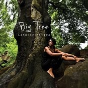 Big Tree Songs