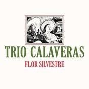 Flor Silvestre Song