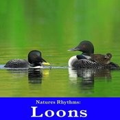 Natures Rhythms: Loons Songs