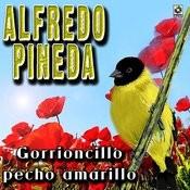 Gorrioncillo Pecho Amarillo Songs