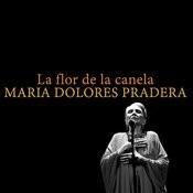 La Flor De La Canela Song