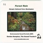 Forest Rain Songs