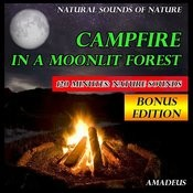 Campfire In A Moonlit Forest: Natural Sounds Of Nature: Bonus Edition Songs