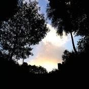 Nature Sound - Mizunami - Cicadas02 - Single Songs