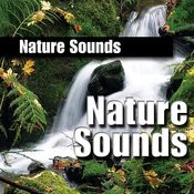 Nature Sound Songs