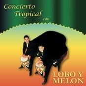 Concierto Tropical Con Lobo Y Meln Songs