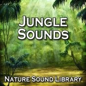 Discover The Natural Beauty Of The Jungle For Peace Of Mind And Total Relaxation Song
