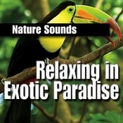 Relaxing in Exotic Paradise Songs