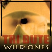 Wild Ones (Flo Rida Feat. Sia Tribute) Song