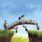 Brij Songs