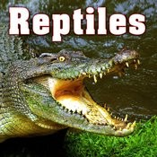 Reptiles Sound Effects Songs