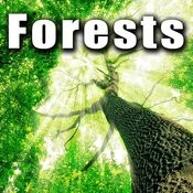 Forests Songs