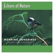 Morning Songbirds Songs