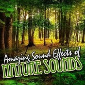 Amazing Sound Effects Of Nature Sounds Songs