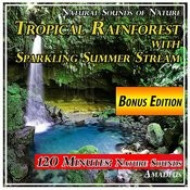 Tropical Rainforest With Sparkling Summer Stream: Natural Sounds Of Nature: Bonus Edition Songs