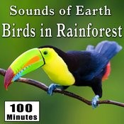 Sounds Of Earth: Birds In Rainforest Songs