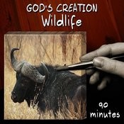 Wildlife (90 Minutes) Songs