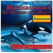 Meeresrauschen Mit Delfinen Und Walen: Natur Pur: Sonderausgabe Songs